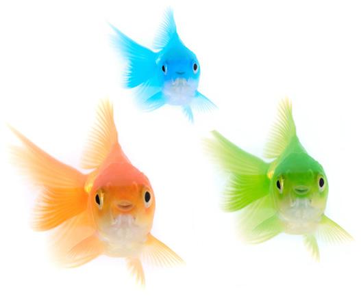 kontakt fish