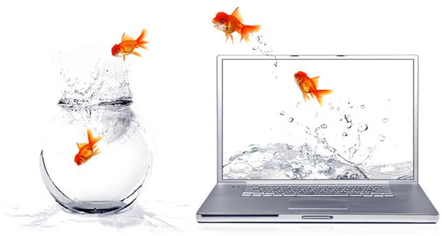 initiativbewerbung fish