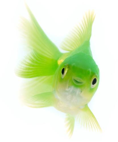profitecit fish